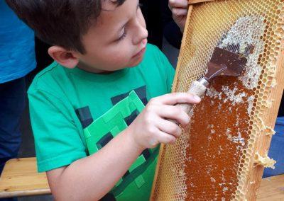 Grundschule Dietingen Besuch bei den Bienen