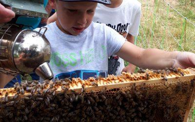 Besuch bei den Bienen